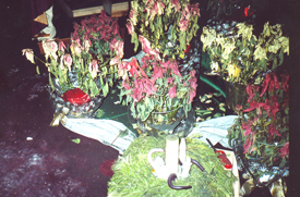 Pointsettias wilted because of heat and lack of oxygen